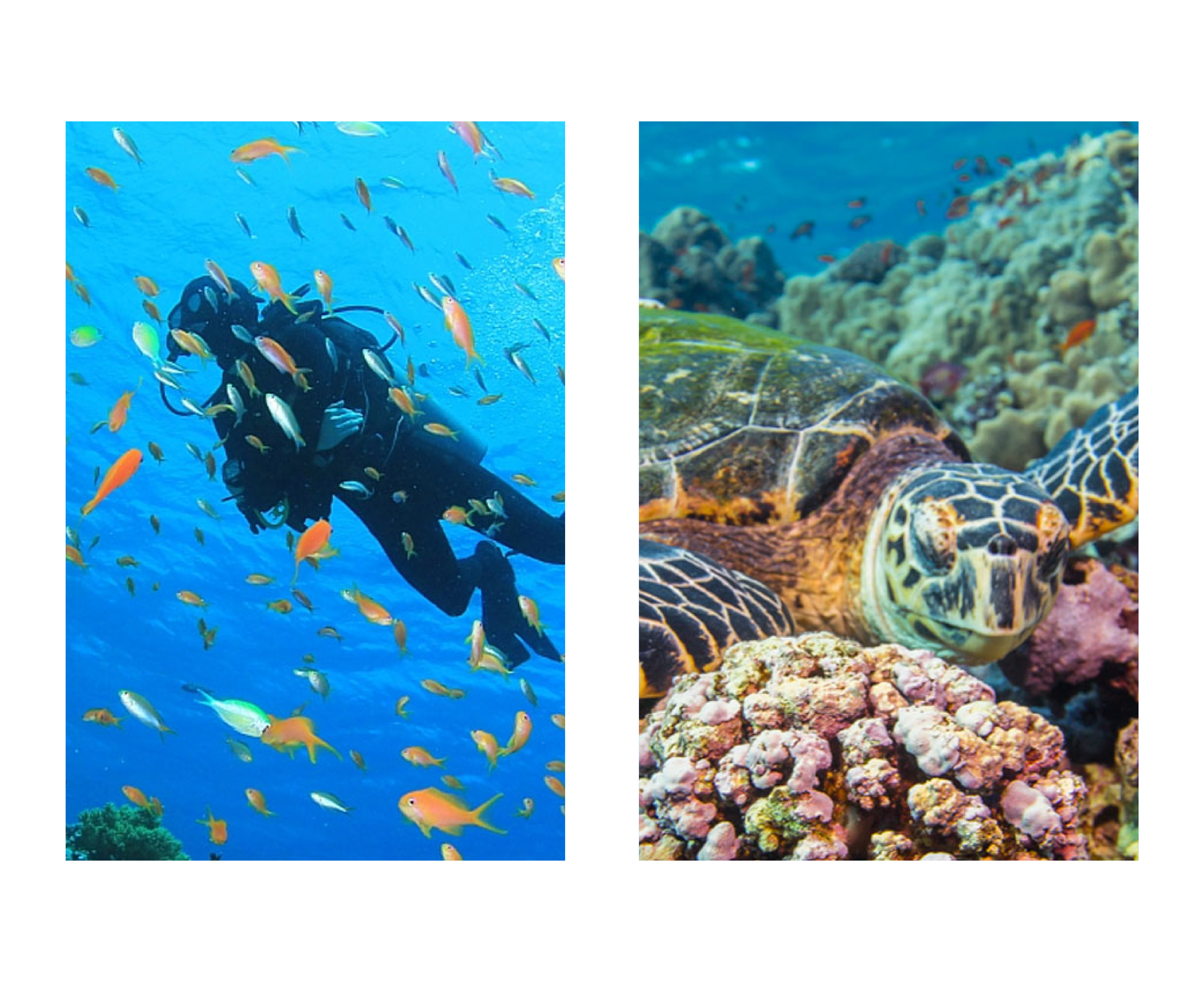 Diver, fish, and a turtle