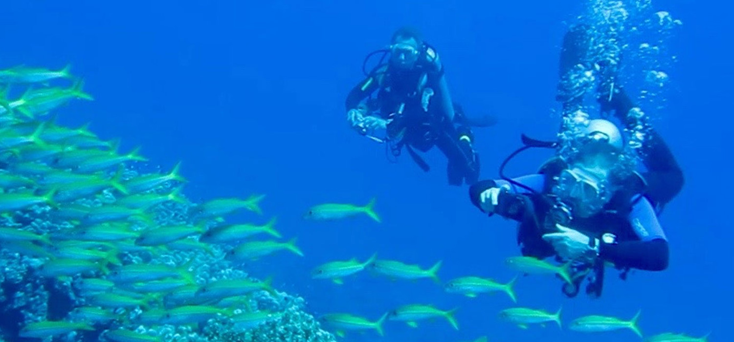Two divers photographing marine life