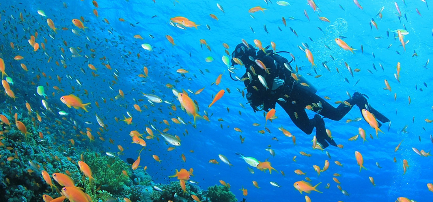 Diver among colorful fish and corals
