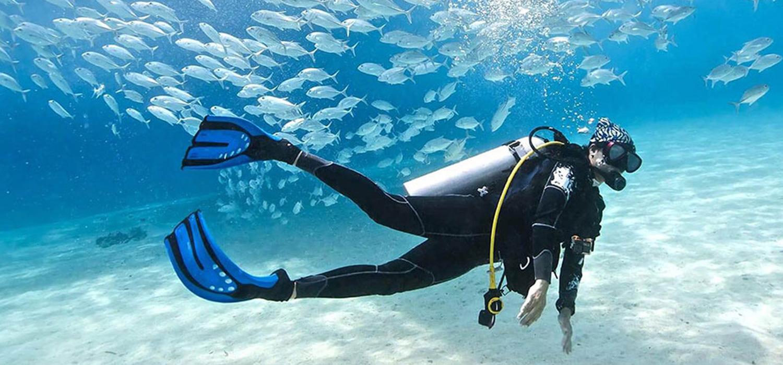 Diver near a school of fish